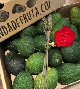aguacate hass con rosa