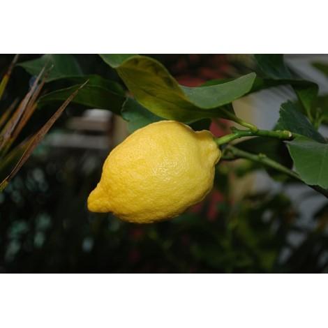limon de cascara gruesa