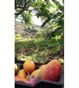 fruta y verdura fresca a domicilio