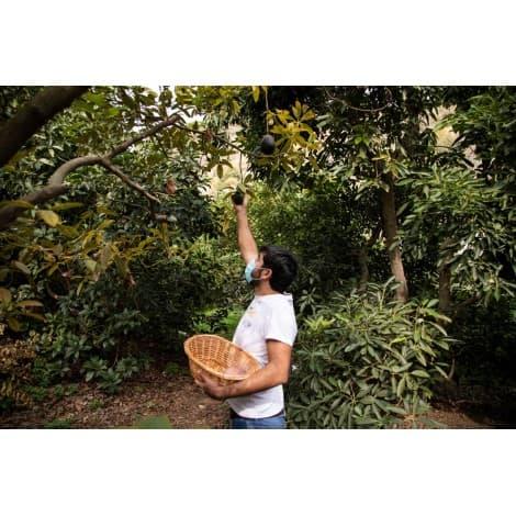 recogida de fruta ecologica