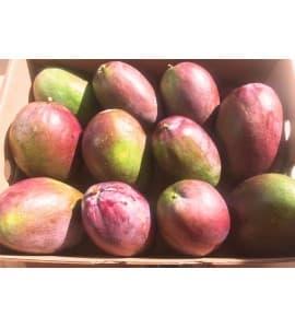 caja de mangos keitt