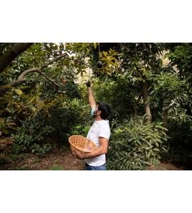 mangos y chirimoyas online