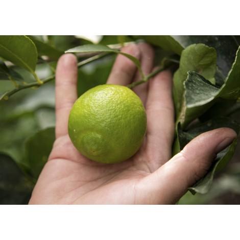 buy fresh limes online