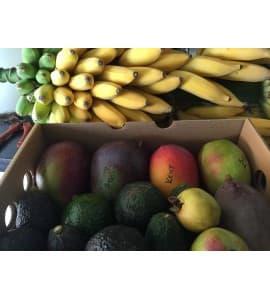 avocado mango box