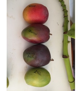 different sorts of mangoes